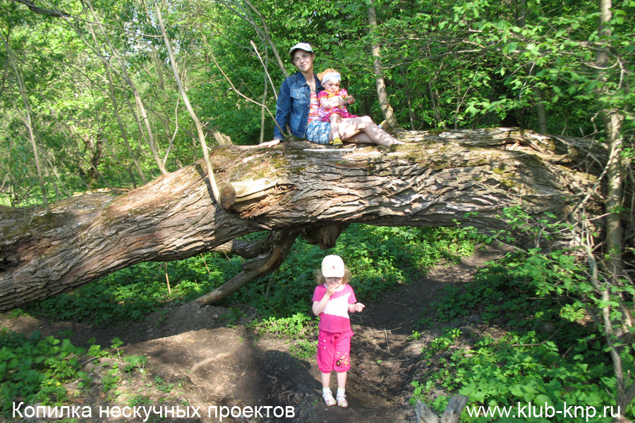 Большие деревья на маршруте